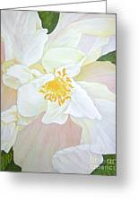 Unfurling White Hibiscus Greeting Card