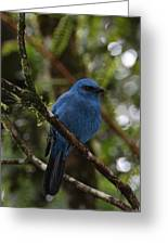 Unicolored Jay Greeting Card