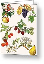 Unidentified Montage Of Fruit Greeting Card