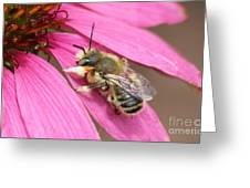 The Color Of Honey Greeting Card