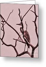 Unknown Bird Greeting Card