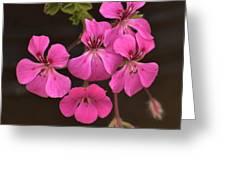 Pink Geranium Flower Greeting Card