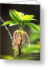 Unknown Tree Flower Greeting Card