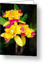 unnamed - Orchid Greeting Card