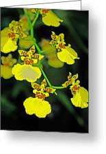 unnamed hybrid Orchid  Greeting Card