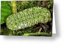 Unripe Anthurium Fruit Greeting Card