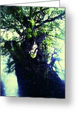 Untitled -tree Star Greeting Card