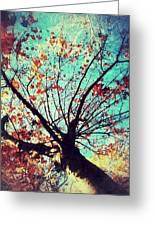 Untitled Tree Web Greeting Card