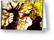 Untitled-twin Trees Greeting Card