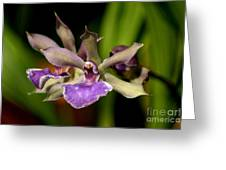 Unusual Orchid Greeting Card