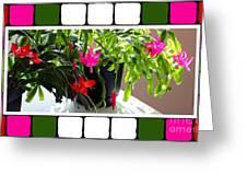 Unusual Simultaneous Bloomers 5 Greeting Card