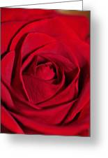 Up Close And Beautiful Greeting Card