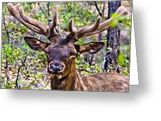 Up Close And Personal With An Elk Greeting Card