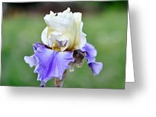 Up Close Elegant Iris Greeting Card