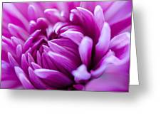 Up-close Flower Power Pink Mum  Greeting Card