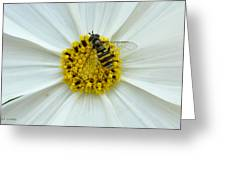 Up Close With The Bee And The Cosmo Greeting Card
