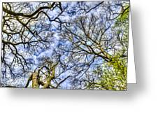 Up Into The Trees Greeting Card
