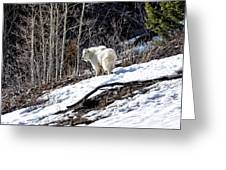 Up On The Mountain Top Greeting Card