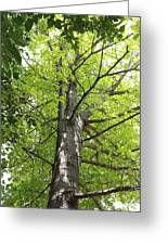 Up The Oak Tree Greeting Card