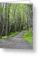 Up The Trail Greeting Card