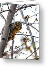 Up The Tree Greeting Card by Robert Bales