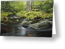 Upper Bear River In Early Autumn Nova Greeting Card