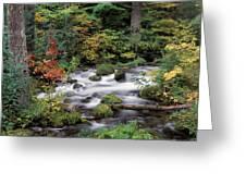 Upper Willamette River Greeting Card