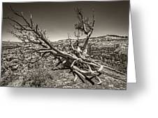Uprooted - Bryce Canyon Sepia Greeting Card
