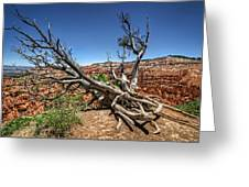 Uprooted - Bryce Canyon Greeting Card