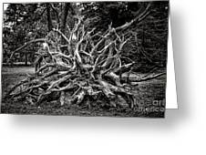 Uprooted Greeting Card