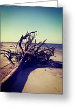 Uprooted Tree On The Beach Greeting Card