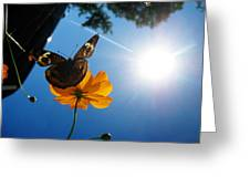 Upside Down Butterfly Greeting Card