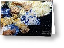 Upside Down Jelly Fish 5d24947 Greeting Card