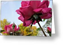 Upward Roses Greeting Card