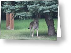 Urban Coyote Greeting Card
