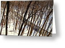 Urban Forest At Dusk Greeting Card