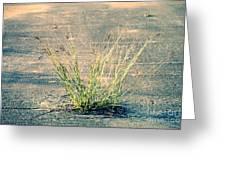 Urban Grass Greeting Card
