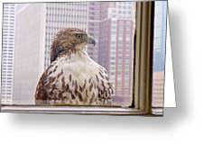 Urban Red-tailed Hawk Greeting Card