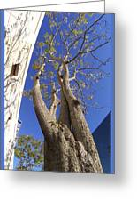 Urban Trees No 1 Greeting Card