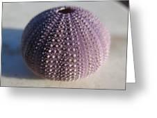 Urchin Greeting Card