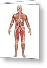 Urinary, Skeletal & Muscular Systems Greeting Card