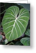 Us Botanic Garden - 121212 Greeting Card