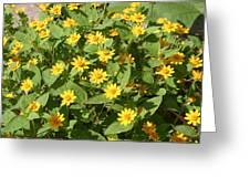 Us Botanic Garden - 121220 Greeting Card