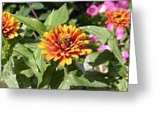Us Botanic Garden - 121221 Greeting Card
