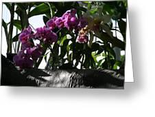 Us Botanic Garden - 121231 Greeting Card