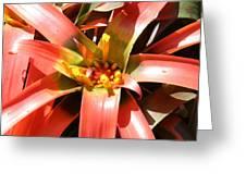 Us Botanic Garden - 12124 Greeting Card
