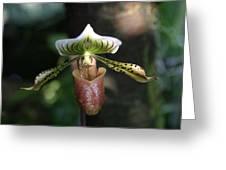 Us Botanic Garden - 121240 Greeting Card