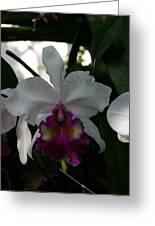 Us Botanic Garden - 121244 Greeting Card by DC Photographer