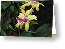 Us Botanic Garden - 121249 Greeting Card