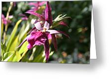 Us Botanic Garden - 12125 Greeting Card
